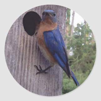 Pegatina del varón del Bluebird
