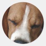 Pegatina durmiente del beagle