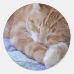 pegatina durmiente del gato
