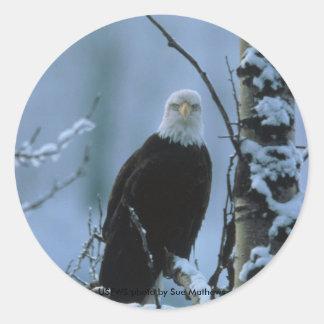 Pegatina/Eagle calvo en invierno Pegatina Redonda