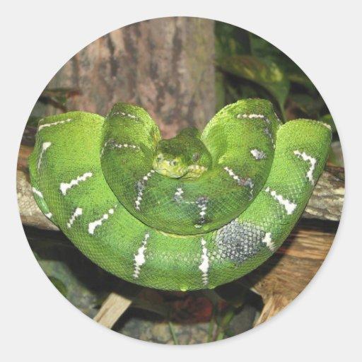 Pegatina esmeralda de la serpiente de la boa del