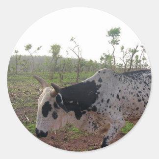 Pegatina etíope de la vaca del Brahman