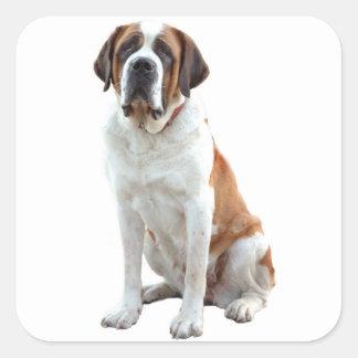 Pegatina/etiqueta del perro de perrito de St Pegatina Cuadrada