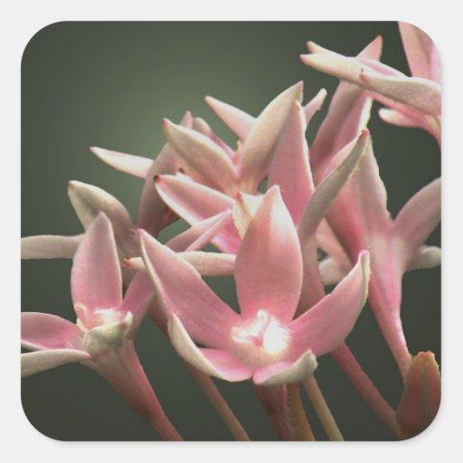 Pegatina floral rosado de Pentas