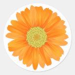 Pegatina floral/sello de la margarita anaranjada d