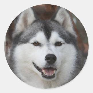 Pegatina fornido del perro