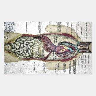 Pegatina francés de la anatomía del vintage