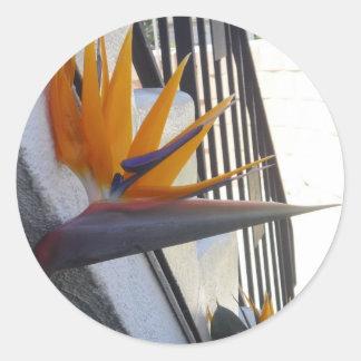 Pegatina grande de la ave del paraíso