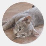Pegatina gris del gato