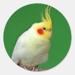 Pegatina hermoso de la foto del pájaro del Cockati