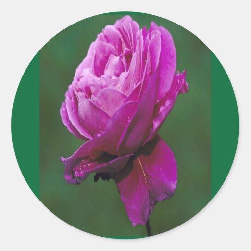 Pegatina hermoso del Lavanda-rosa