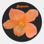 Pegatina hermoso del personalizable de la begonia