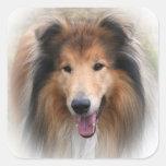 Pegatina hermoso del retrato del perro del collie,