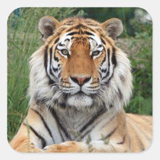 Pegatina hermoso principal de la foto del tigre,