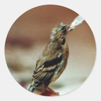 Pegatina huérfano del Goldfinch