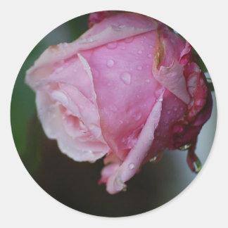 Pegatina ideal del capullo de rosa de Belinda