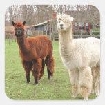 Pegatina lanoso del ~ de las alpacas