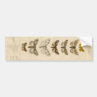 Pegatina largo del espécimen de la polilla pegatina para auto