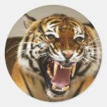 Pegatina malayo del tigre #2