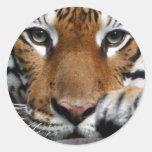Pegatina malayo del tigre #3