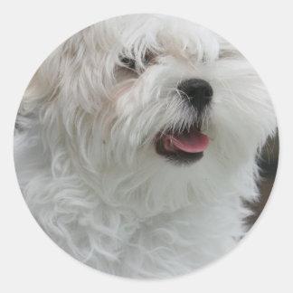 Pegatina maltés blanco del perrito