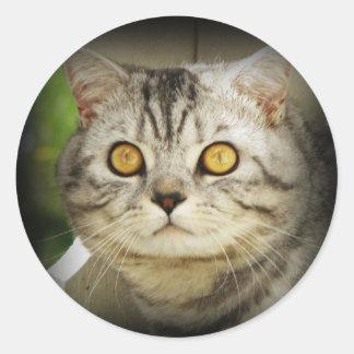 Pegatina manchado plata del gato