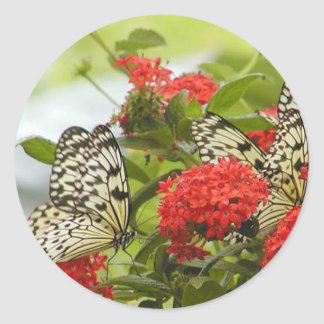 Pegatina - mariposas y flores