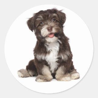 Pegatina marrón y blanco del perro de perrito de