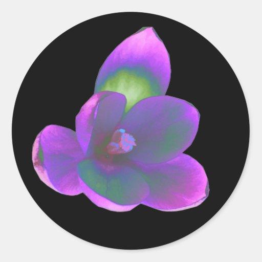 Pegatina místico de la flor del azafrán de la