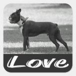 Pegatina negro y blanco del amor de Boston Terrier