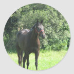 Pegatina oscuro del caballo de bahía
