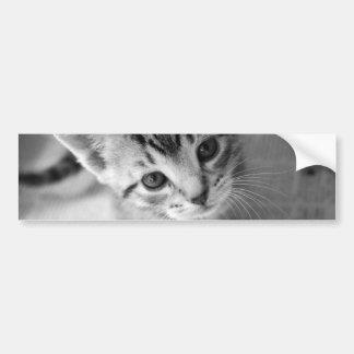 Pegatina para el parachoques adorable del gatito pegatina de parachoque