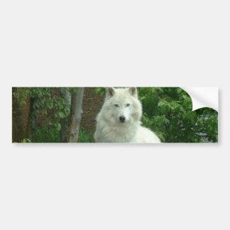 Pegatina para el parachoques ártica del lobo etiqueta de parachoque
