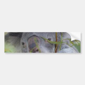 Pegatina para el parachoques australiana de la koa pegatina para auto