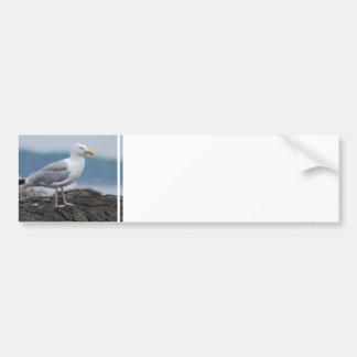 Pegatina para el parachoques costera de la gaviota pegatina de parachoque
