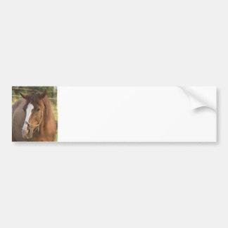 Pegatina para el parachoques cuarta del caballo de pegatina de parachoque