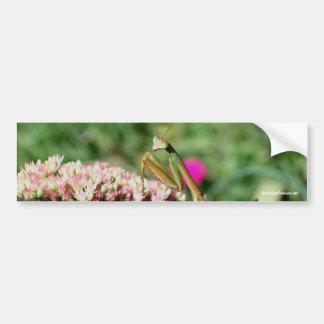 Pegatina para el parachoques de la foto de la natu etiqueta de parachoque