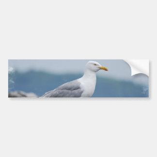 Pegatina para el parachoques de la gaviota etiqueta de parachoque
