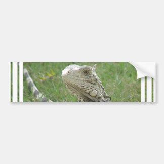 Pegatina para el parachoques de la iguana pegatina para auto