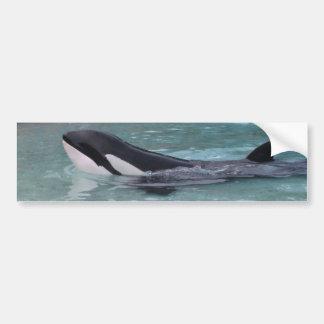 Pegatina para el parachoques de la orca de la orca pegatina de parachoque