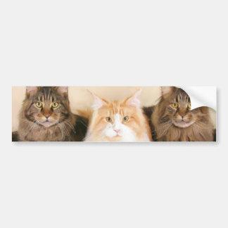 Pegatina para el parachoques de los gatos de coon etiqueta de parachoque