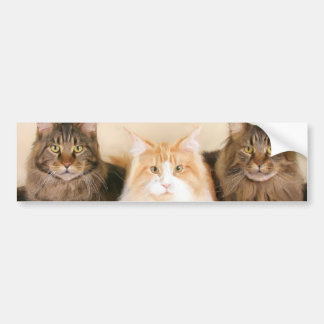 Pegatina para el parachoques de los gatos de coon  pegatina para auto