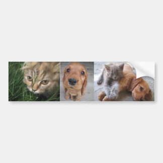 Pegatina para el parachoques de los gatos y de los pegatina para auto
