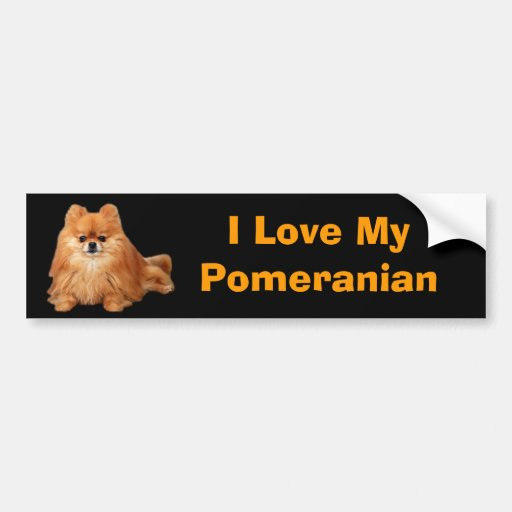 Pegatina para el parachoques de Pomeranian Etiqueta De Parachoque