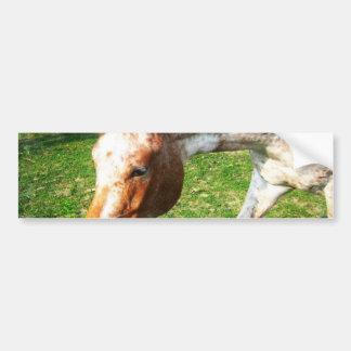 Pegatina para el parachoques del caballo del Appal Etiqueta De Parachoque