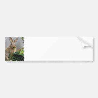 Pegatina para el parachoques del conejo de conejo  pegatina de parachoque
