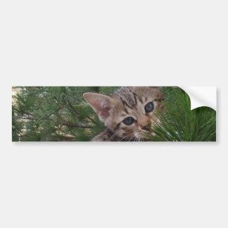Pegatina para el parachoques del fondo del gato de pegatina para auto