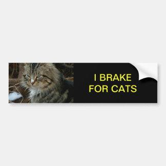 Pegatina para el parachoques del gato de Coon de M