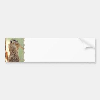 Pegatina para el parachoques del guardia de Meerka Etiqueta De Parachoque