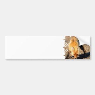 Pegatina para el parachoques del hábitat del Fox r Etiqueta De Parachoque